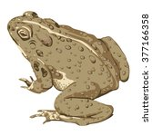 toad sitting  | Shutterstock .eps vector #377166358