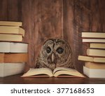an owl animal with glasses is... | Shutterstock . vector #377168653