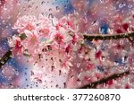 pink flowers in the drops rain... | Shutterstock . vector #377260870