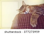 Stock photo lazy cat on the couch with copy space 377273959