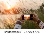 closeup hand using phone... | Shutterstock . vector #377295778