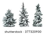 Fir Trees With Snow  Isolated...