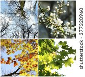 four seasons collage  several... | Shutterstock . vector #377320960