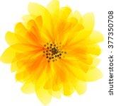 Beautiful Yellow Daisy Flower...