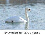 swan's elegance | Shutterstock . vector #377371558