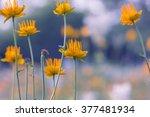 floral background. trollius... | Shutterstock . vector #377481934