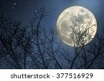 full moon behind naked tree... | Shutterstock . vector #377516929
