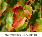 autumn's colors | Shutterstock . vector #37760410