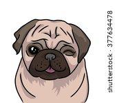 pug dog isolated on white... | Shutterstock .eps vector #377634478