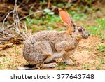 brown hare on the grass | Shutterstock . vector #377643748