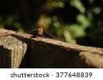 insects in village. insects.... | Shutterstock . vector #377648839