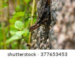 india has many lizards that... | Shutterstock . vector #377653453