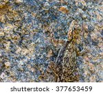 india has many lizards that... | Shutterstock . vector #377653459