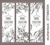 set of 3 vector herbal tea... | Shutterstock .eps vector #377686504