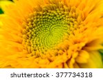 Beautiful Yellow Flower  Macro