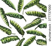 banana leaves watercolor with... | Shutterstock . vector #377737000