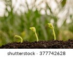 agriculture   seeding  ... | Shutterstock . vector #377742628