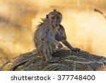 balinese monkey in ubud monkey... | Shutterstock . vector #377748400