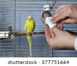 Female Hands Cleaning A Bird...