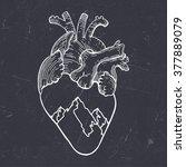 vector vintage anatomical heart ... | Shutterstock .eps vector #377889079