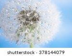 dandelion macro | Shutterstock . vector #378144079
