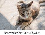 Stock photo cute cat is lying 378156304