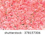 Stock photo beautiful carnation flower pink flower background of carnation flower 378157306