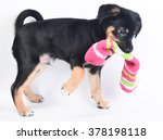 Stock photo playing puppy 378198118