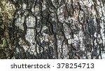 patterns of tree bark | Shutterstock . vector #378254713