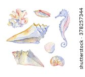 watercolor shell set of... | Shutterstock . vector #378257344