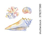 watercolor shell set of... | Shutterstock . vector #378257380
