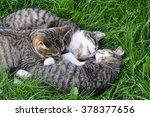 funny tabby cats are sleeping... | Shutterstock . vector #378377656