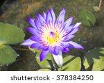 lotus | Shutterstock . vector #378384250