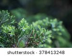 conifer green plant | Shutterstock . vector #378413248