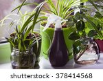 Sprayers And House Plants On A...