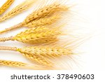 spikelets yellow wheat on a...   Shutterstock . vector #378490603
