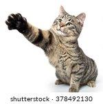 Tabby Cat Swinging Its Paw...