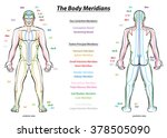 meridian system chart   male... | Shutterstock .eps vector #378505090