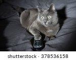 Adorable Russian Blue Cat Mix...