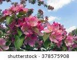 Flowering Shrub Ornamental Tre...