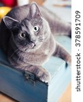 gray cat on blue box at home | Shutterstock . vector #378591709