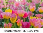 beautiful bouquet of tulips.... | Shutterstock . vector #378622198