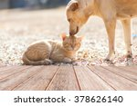 Stock photo dog and cat playing together outdoor 378626140