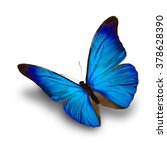 beautiful blue butterfly flying ... | Shutterstock . vector #378628390