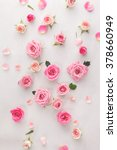 Stock photo roses and petals background roses and petals scattered on white background overhead view 378660949
