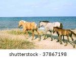Wild Horses On The Beach....
