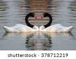 black necked swan swimming in... | Shutterstock . vector #378712219