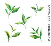 watercolor set with tea leaves... | Shutterstock . vector #378761308