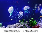 Beautiful Jellyfish  Medusa In...
