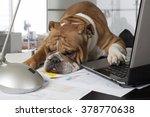 english bulldog exhausting by... | Shutterstock . vector #378770638